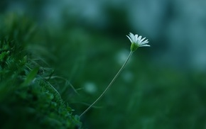 flowers, greenery, white, color, plant