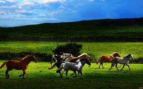 animals, grassland