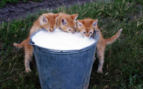kittens, grass, animals, background