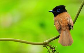 animals, branch, greenery, bird, macro