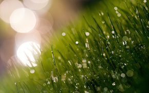 grass, dew, macro, grassland, morning