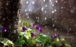 nature, rain, flowers