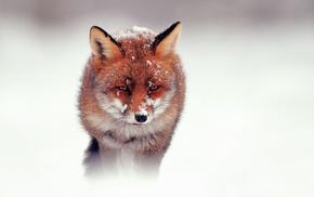 snow, animals, fox, winter