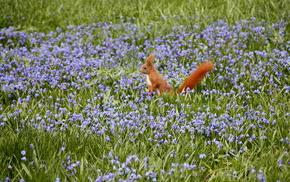 flowers, nature, squirrel, field
