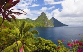 mountain, palm trees, nature, ocean, landscape