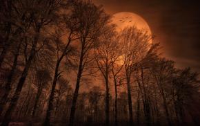 birds, nature, forest, moon, evening