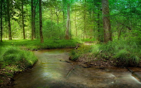 forest, summer, nature, river
