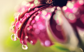 macro, bokeh, drops, highlights, flower