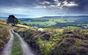 пейзаж, дорога, поле, природа