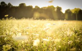 plants, glade, nature, field, grass