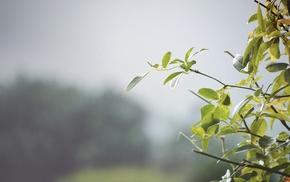 blurred, leaves, nature, mist, green
