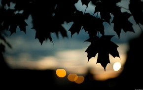 bokeh, photography, leaves, nature, silhouette