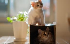 животные, котенок, кошки, двое, daisy, hannah