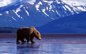 bear, background, mountain, animals, water