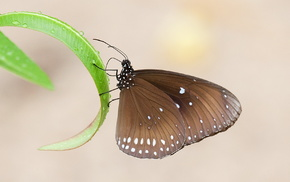 animals, leaves, grass, butterfly