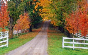 nature, fence, forest, autumn, road