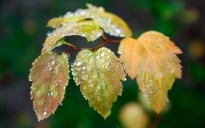 macro, branch, dew, foliage