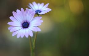 цветок, цветы, сиреневый, зеленый, лепестки