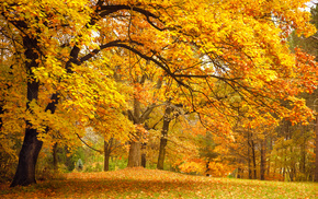 autumn, park, glade, trees, forest