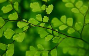 branch, foliage, macro, greenery