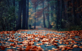 foliage, autumn, morning, park, bokeh