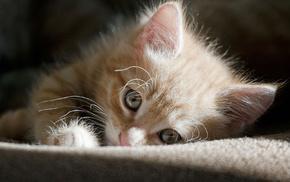 kitten, light, animals