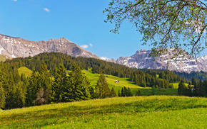mountain, nature, grassland, forest, Switzerland