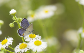 greenery, flowers, chamomile, butterfly