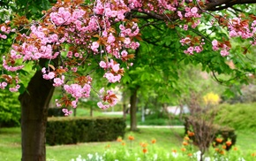 park, flowers, nature, spring