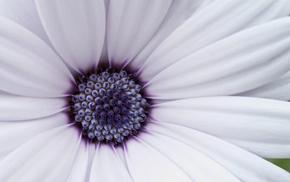 flowers, macro, petals, flower