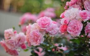 macro, motion blur, flowers, petals, roses