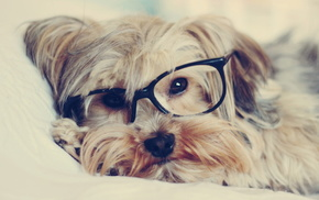 glasses, dog, animals