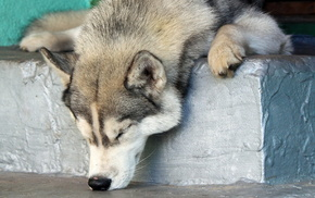 rest, dog, animals