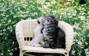 cat, kitten, animals