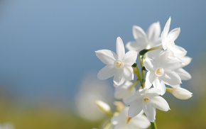 spring, sky, petals, flowers, flower