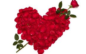 flower, rose, roses, flowers