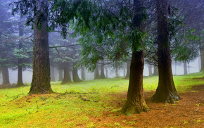 mist, nature, morning, forest, trees
