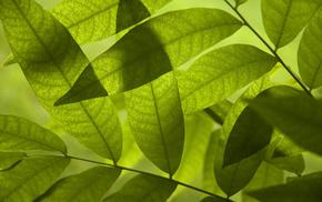 macro, foliage, greenery