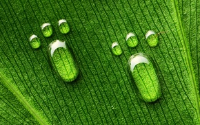 macro, green, drops, leaf