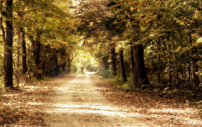 forest, road, nature, trees, autumn
