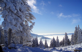 forest, nature, snow, winter, mountain