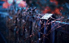 fence, plant, bokeh, evening, macro