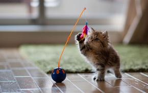 animals, kitten, toy