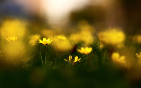 flowers, grass, nature, motion blur, spring