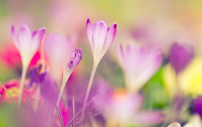 macro, spring, motion blur