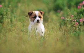 grass, dog, animals, puppy