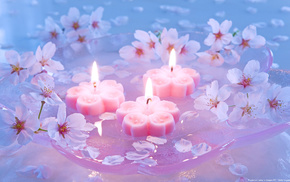 flowers, candles