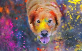 dog, animals, paints