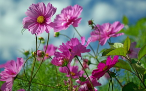 flowers, summer, nature