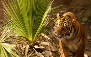leaves, sit, tiger, animals, grass